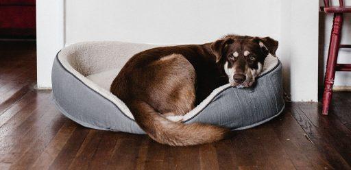 casitas para perros de madera