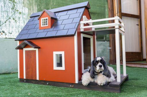 como hacer una casa para perro economica